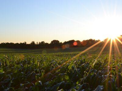 3 coltivazioni azienda agricola